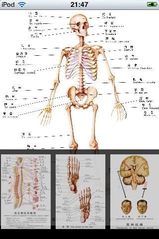 苹果的解剖步骤图片