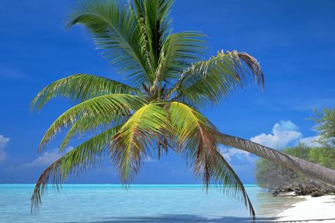 海滩椰树林高清壁纸