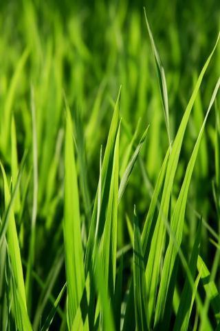 【绿色青草壁纸】绿色青草壁纸免费下载