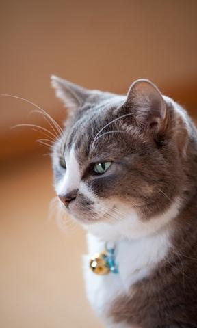 【起司猫卡通手机壁纸】起司猫卡通手机壁纸免费下载