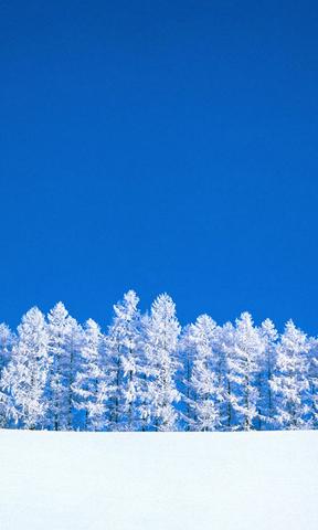 【冬季美丽的雪景手机壁纸】冬季美丽的雪景手机壁纸