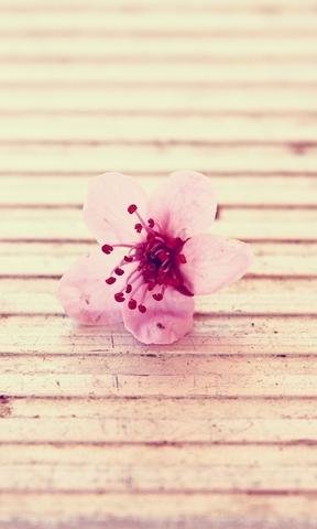 春天唯美小清新图片