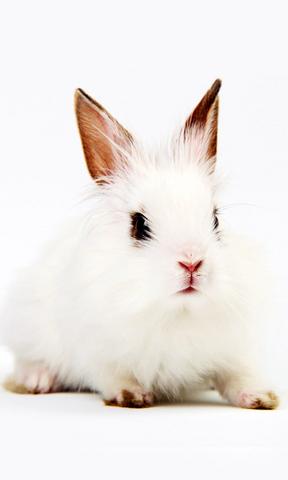 壁纸 动物 兔子 288_480