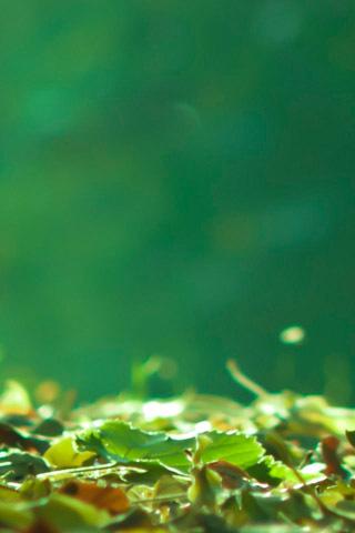 雨中春天发芽图片