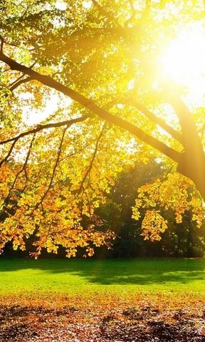 壁纸 风景 森林 桌面 288_480 竖版 竖屏 手机