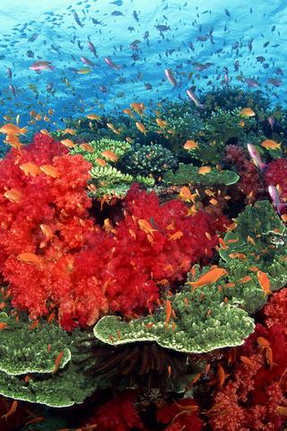 【神奇的海底世界生物壁纸】神奇的海底世界生物壁纸