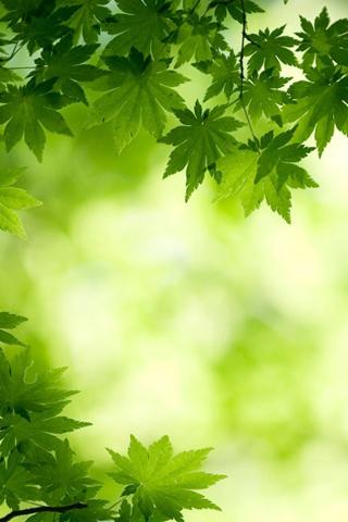 绿色养眼壁纸