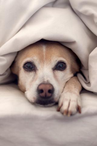 【躲藏的小狗手机壁纸】躲藏的小狗手机壁纸免费下载