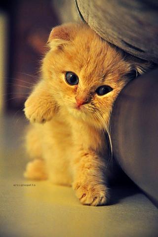 【萌猫手机壁纸】萌猫手机壁纸免费下载