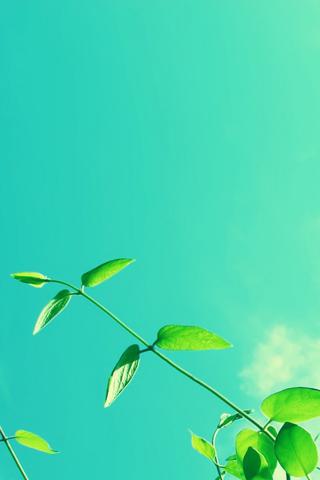 绿叶阳光头像图片唯美