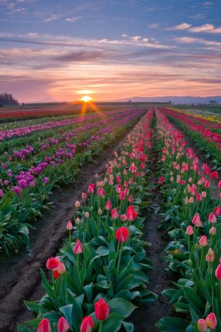 阳光下的信仰手机壁纸 唯美向往的风景壁纸 春天的气息植物美景壁