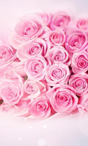 美丽唯美花卉手机壁纸
