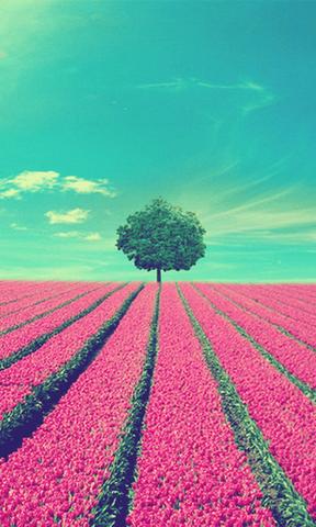 梦幻自然美景手机壁纸