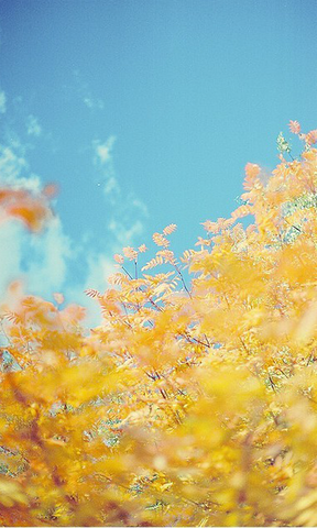 清新绿色壁纸 春季唯美花卉iphone手 城市街道风景手机壁纸 鼓浪屿
