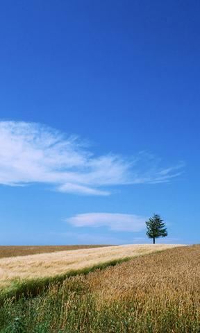 【清新自然风景壁纸】清新自然风景壁纸免费下载_手机