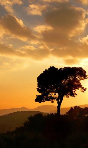 手机壁纸竖屏树木