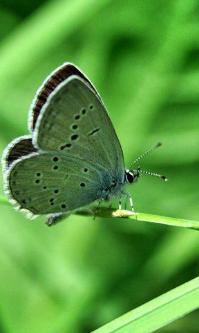 【绿色蝴蝶手机壁纸】绿色蝴蝶手机壁纸免费下载