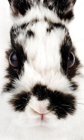 【可爱兔子手机壁纸】可爱兔子手机壁纸免费下载