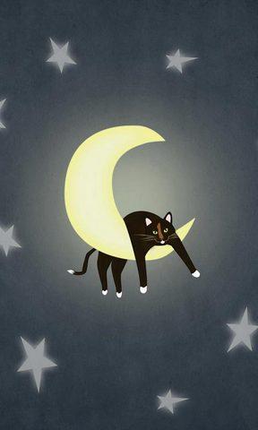 【可爱小猫咪手机壁纸】可爱小猫咪手机壁纸免费下载