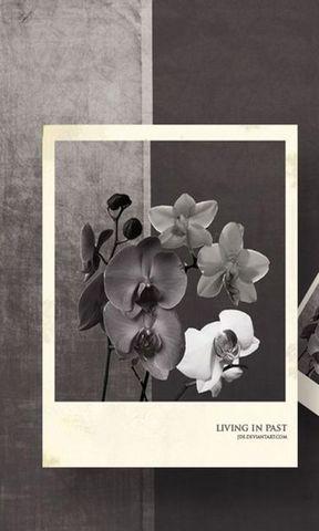 【黑白照片手机壁纸】黑白照片手机壁纸免费下载