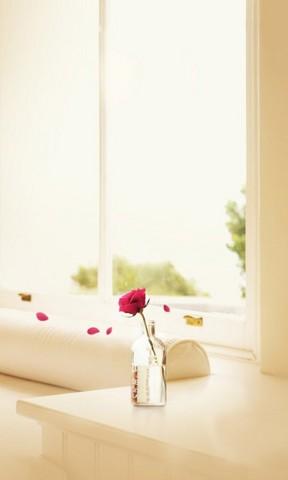 蜷川实花手机壁纸 唯美波斯菊花朵手机壁 高清雏菊特写手机壁纸 唯美