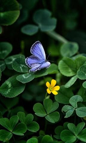 蓝紫色蝴蝶手机壁纸