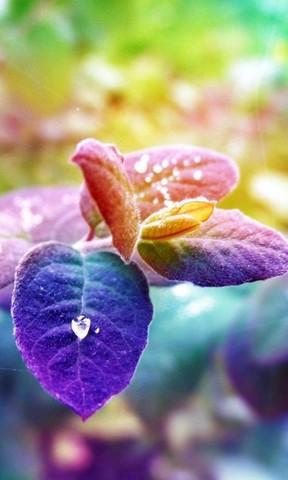 绿色植物手机壁纸 唯美樱花手机壁纸 梅花盛开高清手机壁纸  彩色叶子