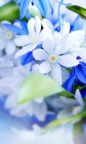 【唯美的花仙子手机壁纸】唯美的花仙子手机壁纸免费