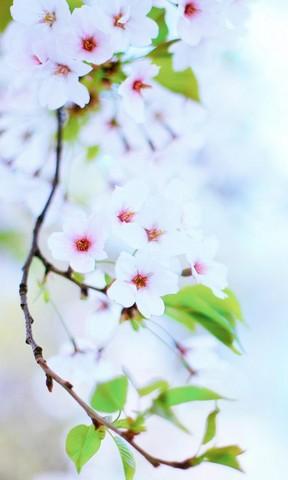 【冬天已过春天还会远吗手机壁纸】冬天已过春天还会