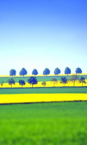 【绿油油的田野手机壁纸】绿油油的田野手机壁纸免费