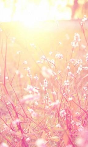 【唯美温馨的花儿手机壁纸】唯美温馨的花儿手机壁纸