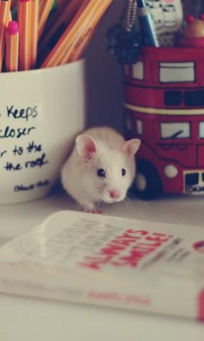 可爱小老鼠手机壁纸