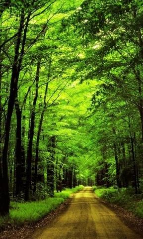 【自然山水景色手机壁纸图片】自然山水景色手